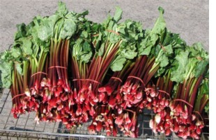 French Harvest Red Rhubarb Seed
